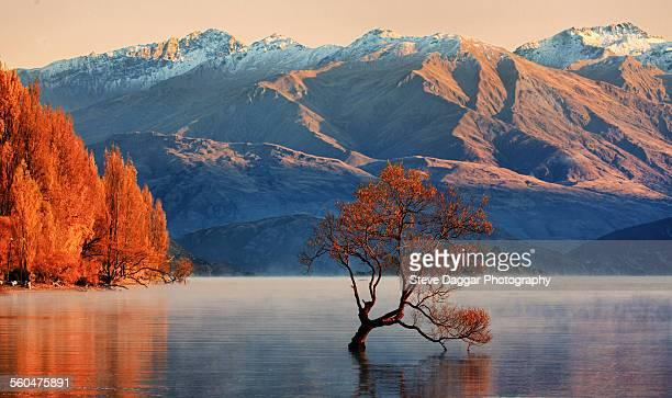 wanaka foggy sunrise - wanaka - fotografias e filmes do acervo