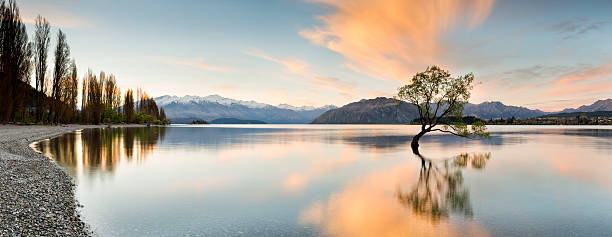 Wanaka - Lone tree sunrise at lake wanaka