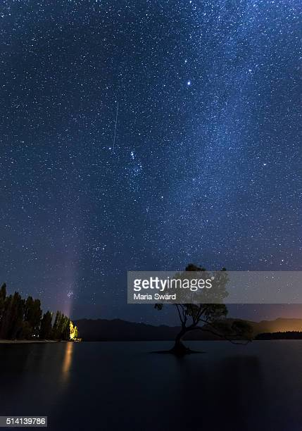 wanaka - the famous tree under starry sky with falling star - coltsfoot stock photos and pictures