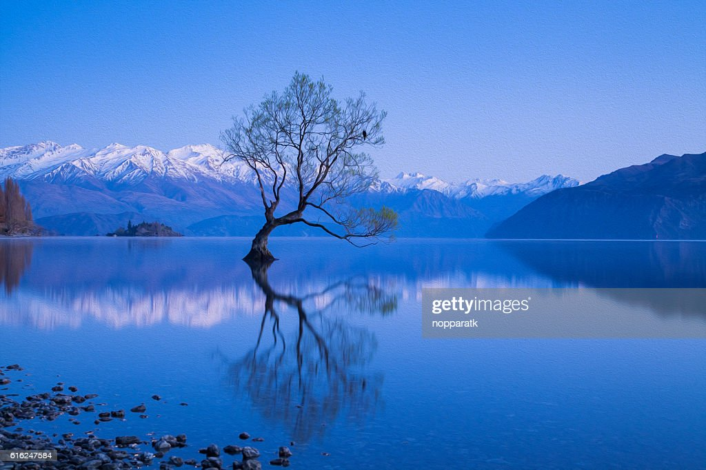 Wanaka tree in oil painting filtered : Foto de stock