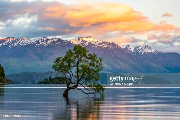 wanaka tree - wanaka - fotografias e filmes do acervo