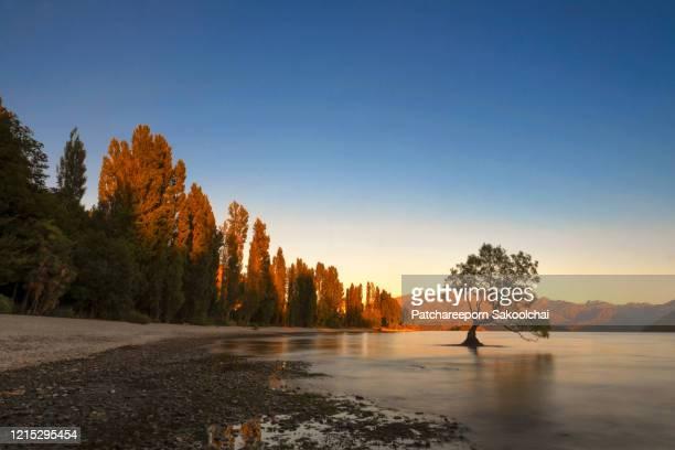 wanaka tree - new zealand stock-fotos und bilder