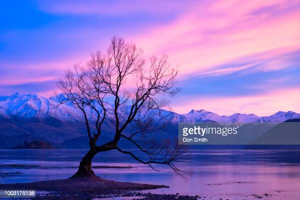 wanaka willow and southern alps - don smith stock photos and pictures