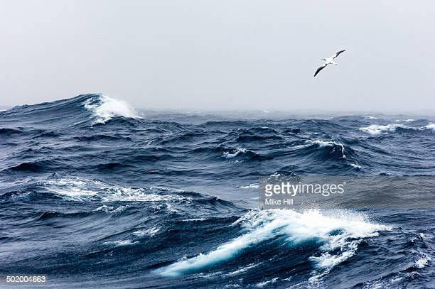 wandering albatross in flight over a rough sea - animals in the wild stock pictures, royalty-free photos & images