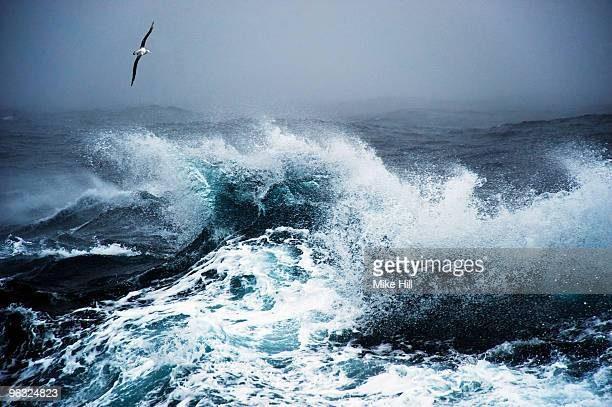wandering albatross in flight over rough sea - drake passage stock photos and pictures