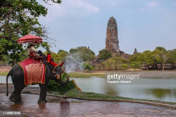 wang chang, ayutthaya or elephant elephant, ayutthaya and corral located beside khumphan visitors can come to experience the excitement on the back of the elephant. whether it is an elephant ride, visiting an archaeological site - {{asset.href}} stock-fotos und bilder