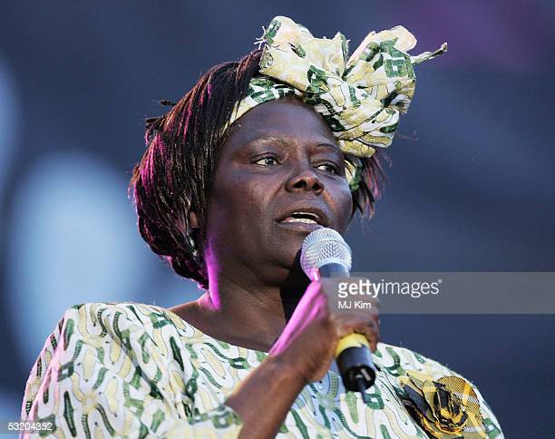 Wangari Maathai is seen performing at Live 8 Edinburgh concert at Murrayfield Stadium on July 6 2005 in Edinburgh Scotland The free gig labelled...
