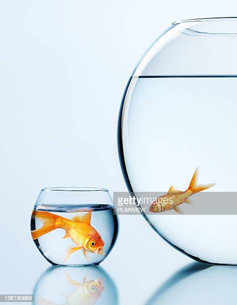 i want 2 move - fish love stock photos and pictures