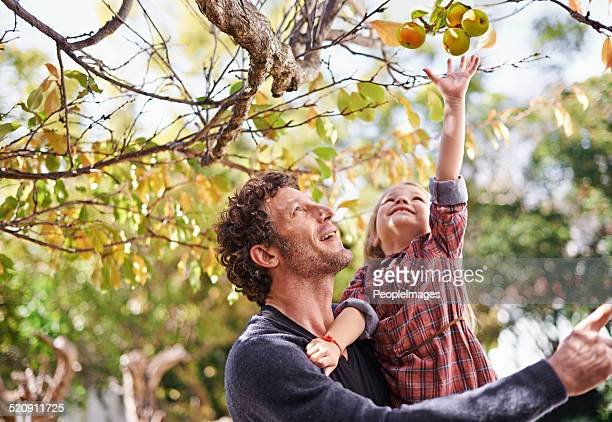 i want that one dad! - apple fruit stock photos and pictures