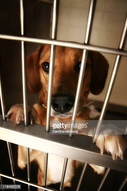 wanting attention - dog pound stock pictures, royalty-free photos & images