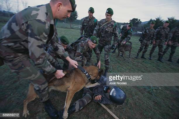 War dogs of the 2nd Foreign Parachute Regiment in Calvi Dogs are trained in combat to be used as scouts sentries and trackers