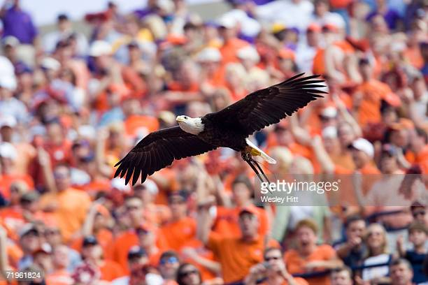 War Eagle of the Auburn Tigers flying around the stadium before a game against the LSU Tigers on September 16 2006 at JordanHare Stadium in Auburn...