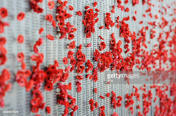 war memorial australia canberra poppies - poppy stock pictures, royalty-free photos & images