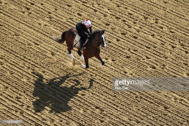 War of Will trains on the track during a training session for the upcoming Preakness Stakes at Pimlico Race Course on May 15 2019 in Baltimore...