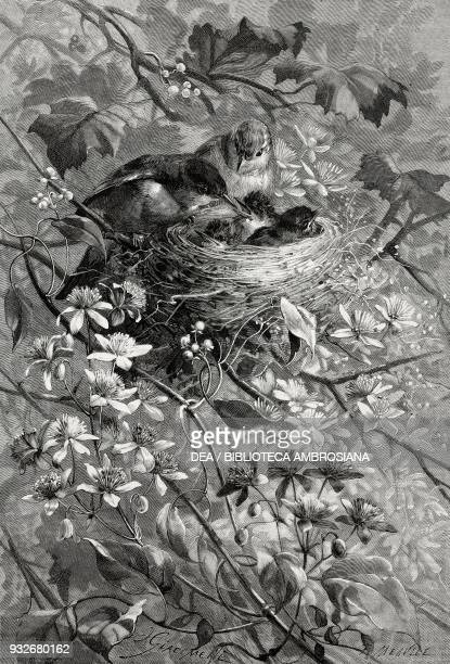 Warblers and nestlings in a nest illustration from the weekly Rivista Illustrata No 219 March 11 1883