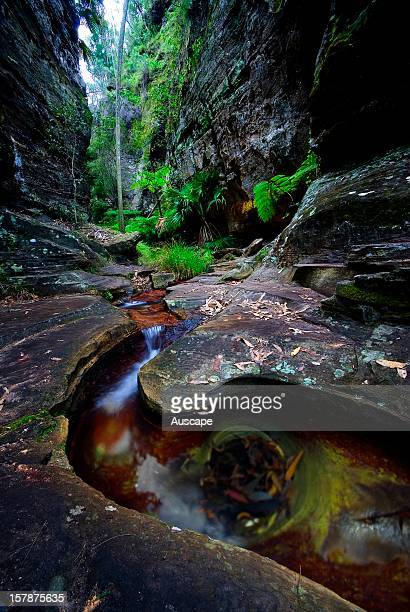 With its cool wet microclimate it is ideal for the ancient King fern , the world's largest fern. Carnarvon Gorge Section, Carnarvon National Park,...