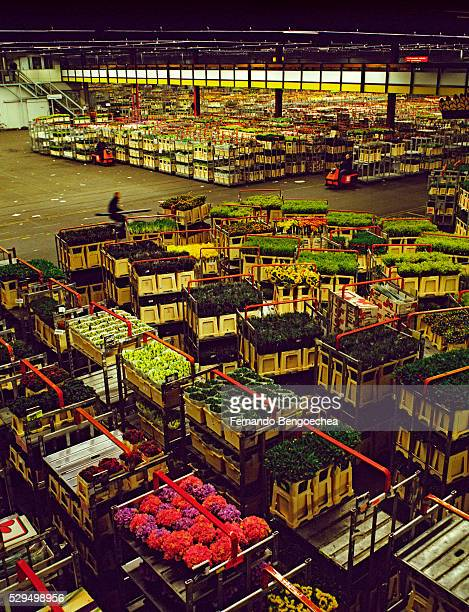 Warehouse for Shipping Flowers and Plants