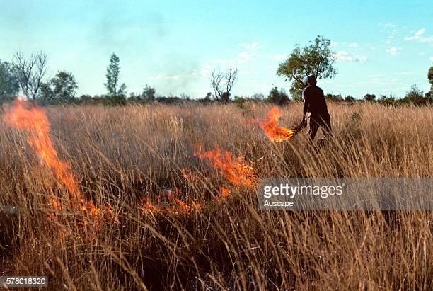Warlpiri people burning spinifex to promote growth Tanami Desert Northern Territory Australia