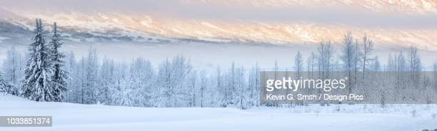 warm afternoon sunlight bathes the distant mountains in-between low clouds obscuring the hillside, hoar frost covered birch trees lining the shaded foreground, turnagain pass, kenai peninsula, south-central alaska - kenai mountains stock pictures, royalty-free photos & images