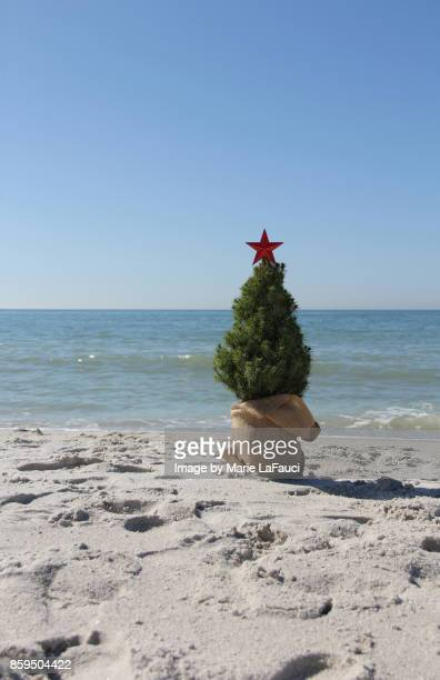 warm christmas tree at the beach - marie lafauci stock pictures, royalty-free photos & images