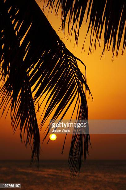 Warm golden hues of a Caribbean sunset contrast against a palm tree on the beach in Cuba to create a lovely silhouette.