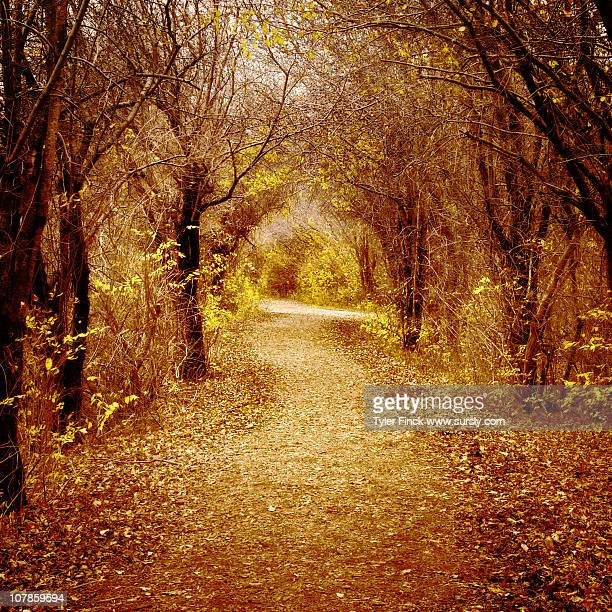 warm looking woods - sursly stock pictures, royalty-free photos & images