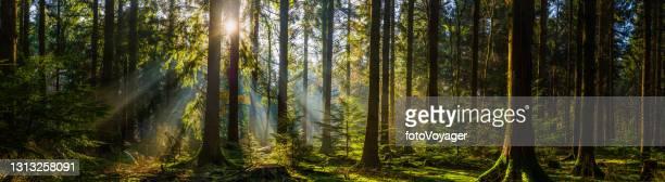 warm sunlight illuminating idyllic forest woodland clearing panorama - idyllic stock pictures, royalty-free photos & images