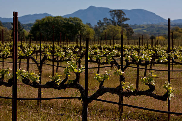 Springtime in California Wine Country