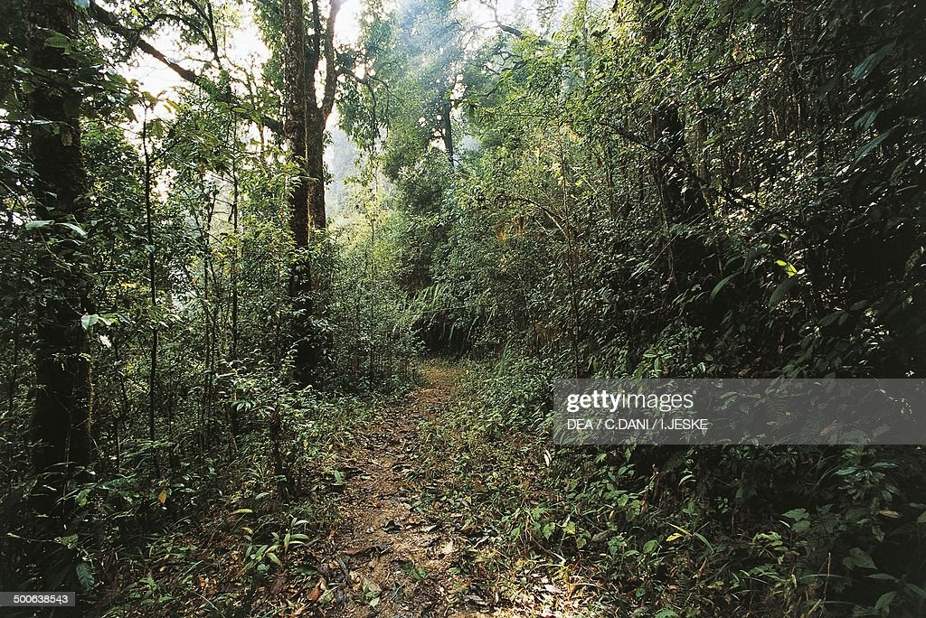 Warm temperate deciduous forest... : News Photo