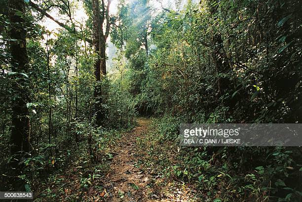 Warm temperate deciduous forest Darjeeling Bengal India