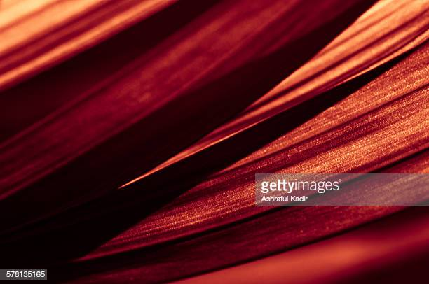A warm toned photo of the texture of a leaf