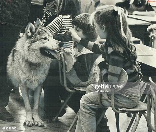 A warm welcome for a wolf Hit of Eglinton Public School yesterday was visitor from California a 2 1/2yearold timber wolf named Rocky who's being...