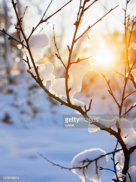 Warm winter sun