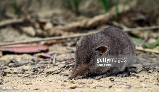 Warming up at dawn. shrew