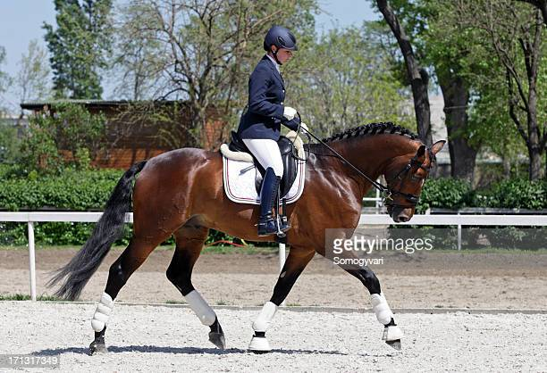 warming up dressage - dressage stock pictures, royalty-free photos & images