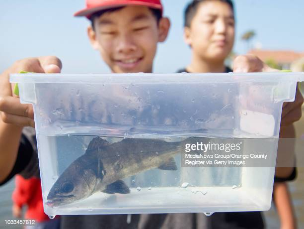 Warner Middle School student Tim Pham is all smiles as he gets ready to release a white seabass into the ocean one of 10 that he and his classmates...