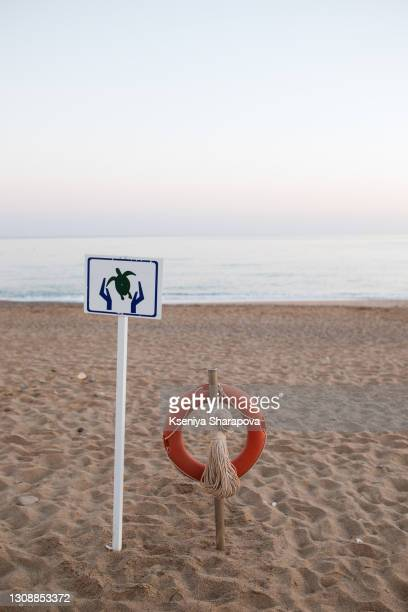 warning sign turtle crossing, turtles cross the beach to lay eggs, crete, greece-stock photo - animal nest stock pictures, royalty-free photos & images