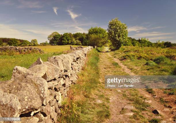 warren hills copt oak - leicestershire stock pictures, royalty-free photos & images