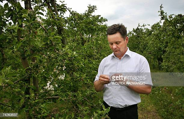 TO GO WITH AFP STORY BY ELISE MENAND Farmer Miroslaw Maliczewski shows apple tree flowers damaged by frost at an orchard near Grojec 15 May 2007...