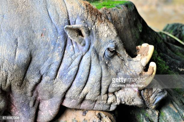 warthog in profile - ugly pig stock pictures, royalty-free photos & images