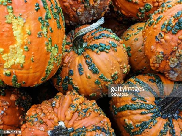 Warty Autumn Harvest Pumpkins