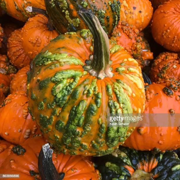 warty pumpkins, colorful autumn squash - warzen stock-fotos und bilder