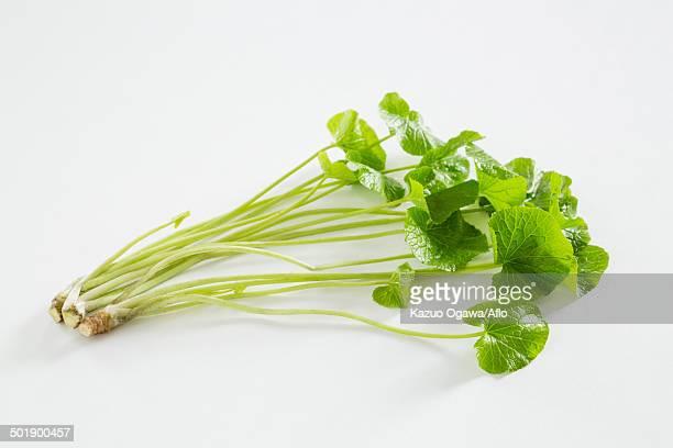 wasabi greens - ワサビ ストックフォトと画像