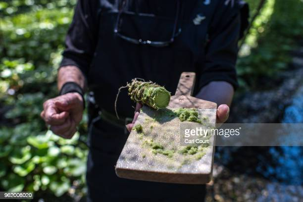 Wasabi master grates a wasabi root to produce paste at Daio Wasabi Farm on May 24 2018 in Azumino Japan Operating since 1923 in Azumino one of...
