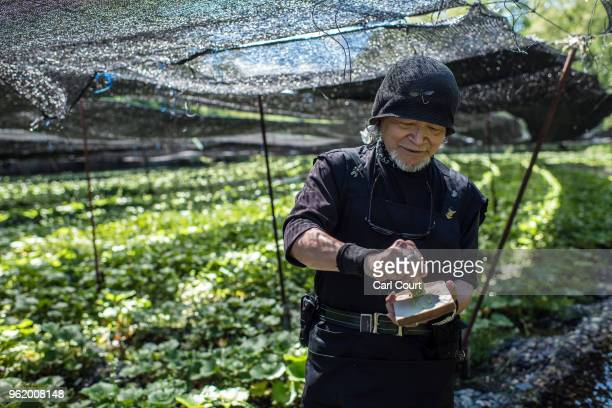 Wasabi master grates a wasabi root to produce paste at Daio Wasabi Farm on May 24, 2018 in Azumino, Japan. Operating since 1923 in Azumino, one of...