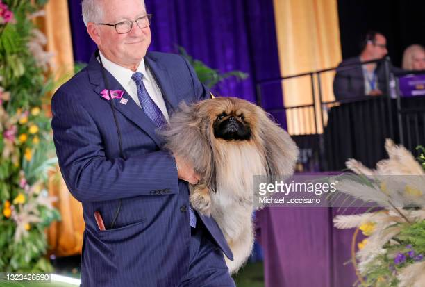 Wasabi the Pekingese, with handler/owner David Fitzpatrick, wins Best in Show at the 145th Annual Westminster Kennel Club Dog Show on June 13, 2021...