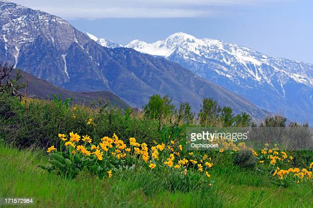 wasatch mountains in spring - utah stock pictures, royalty-free photos & images