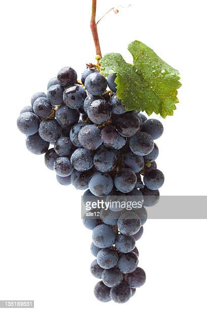Lavar conjunto de uva azul sobre blanco