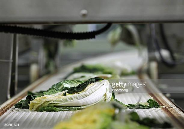 Washed cabbages move along a conveyor belt on the production line at the Gamchilbaegi Co kimchi factory in Gwangju South Korea on Tuesday Sept 10...