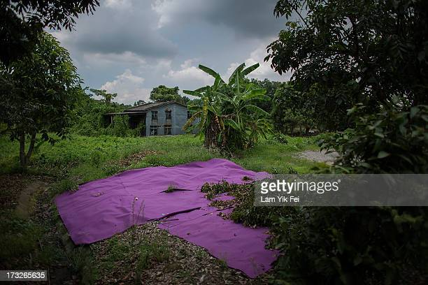 A washed carpet is placed in the sun to dry outside a village house in Ma Shi Po Village on July 11 2013 in Hong Kong China The North East New...